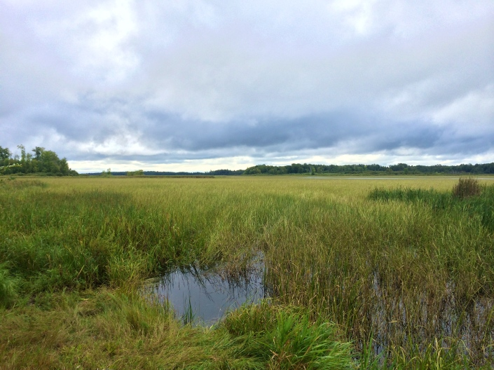 Stands of wild rice on Kettle Lake, Fon du Lac